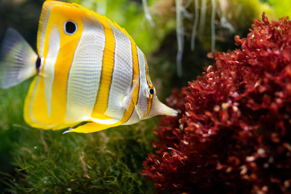 yellow-and-white-fish-1112007